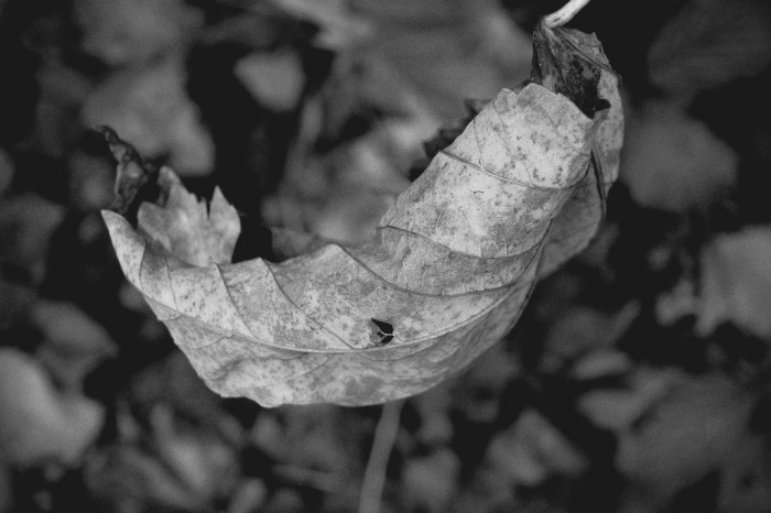 How To Create An Amazing PhotographyBlog